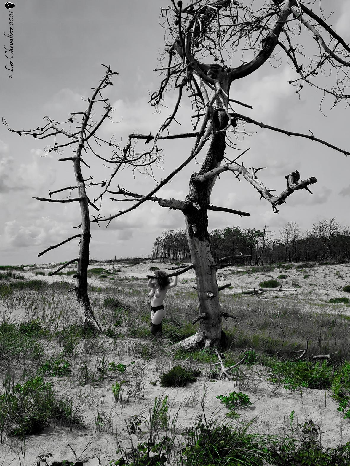 """L'arbre, une photo de la collection """"Performance"""" par Les Chevaliers Photographes."""